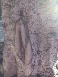 "Vulva or ""Cunt"" tree in San Francisco."